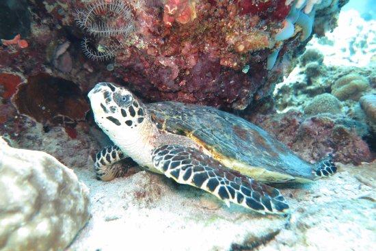 Lankayan Island Dive Resort Buchen