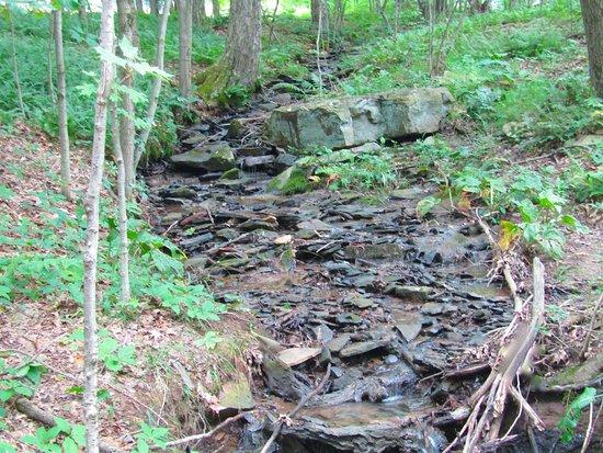 Laurel Hill State Park: Brook
