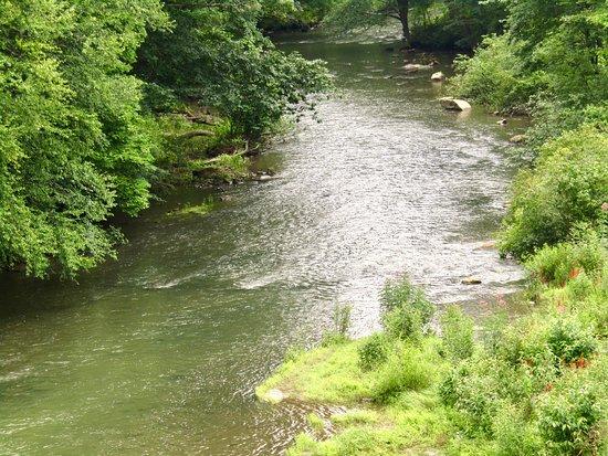 Laurel Hill State Park: Creek