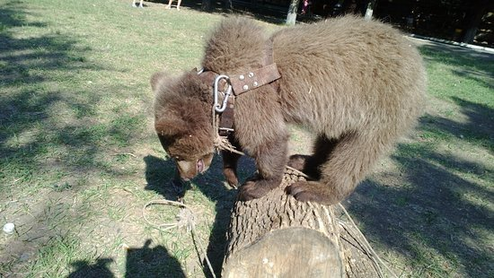 Mariupol Zoo