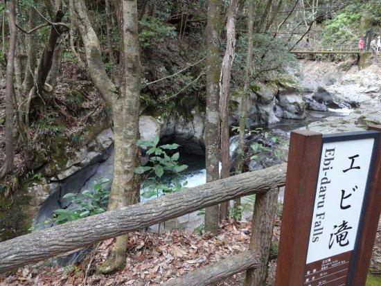 Kawazu Nanadaru Waterfalls: エビ滝