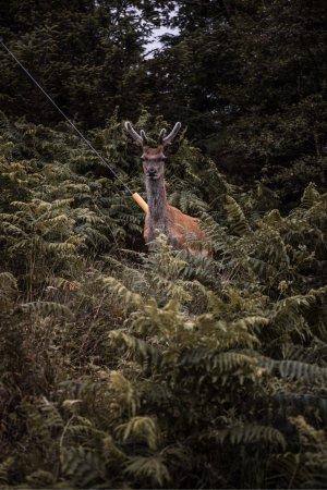 Lochinver Holiday Lodges: photo1.jpg