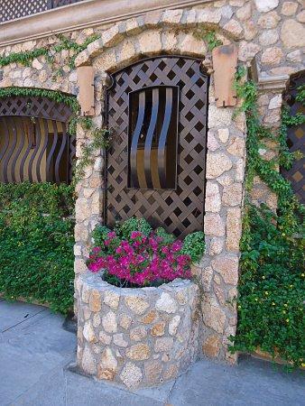 cabo vista hotel jardineras