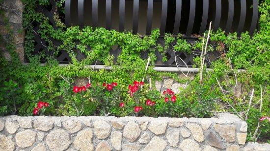 cabo vista hotel jardineras con rosas del desierto