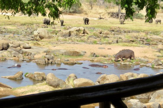 Ruaha River Lodge: View from our Banda deck