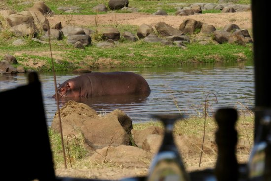 Ruaha River Lodge: View from our table at lunch