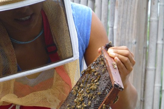 Big Island Bees: Bees and honey