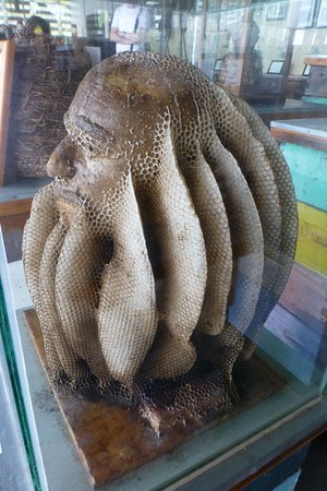 Big Island Bees: Honeycomb creation