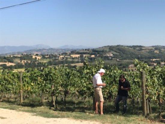 Tordandrea, Italia: Luca teaching us about the sagrantino grapes