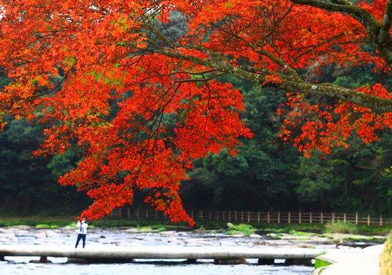 Sekinoo Fall: 錦秋の関之尾