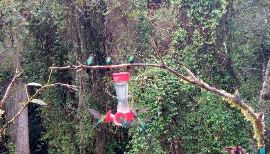 Provincie San Jose, Costa Rica: Hummingbirds at one of the feeders on the deck