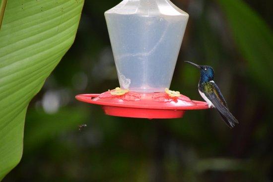 Hosteria Septimo Paraiso: Colibries.. una de las tantas variedades que se pueden observar