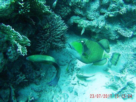 Funny Divers Diving Center: Umm Gammar diving spot (17m depth)