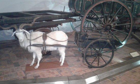 Toowoomba, Australien: Believe it or not...a Billy Cart.