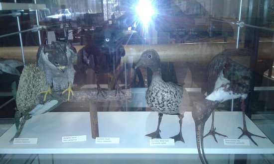 Toowoomba, Australië: The Museum also displays some of the bird life of the area.