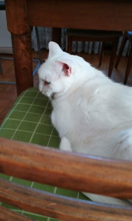 Cat's Point