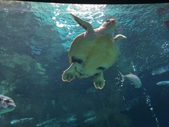 Beach Club Aphrodite : Creta aquarium - only 2,5 km far away! We recommend!