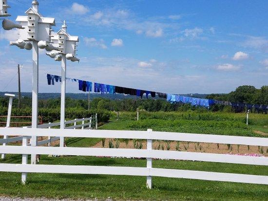 New Wilmington, Pennsylvanie : Purple Martins Bird Houses and Laundry