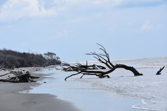 Georgetown, SC: Cedar Island South Santee River