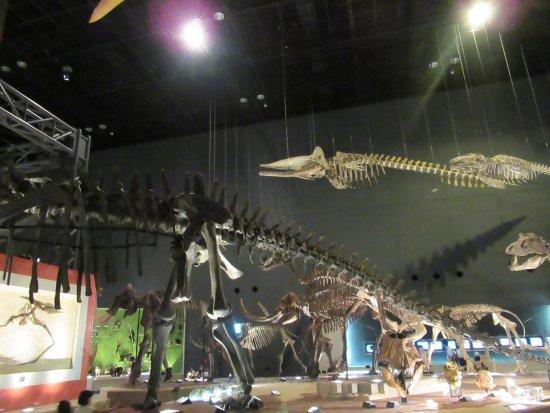Kanagawa Prefectural Museum of Natural History: 写真に納まりきらない恐竜の展示