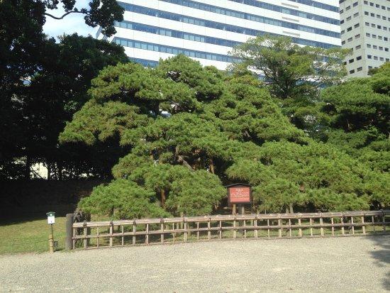 素敵な公園 - Picture of Hama Rikyu Gardens, Chuo - TripAdvisor