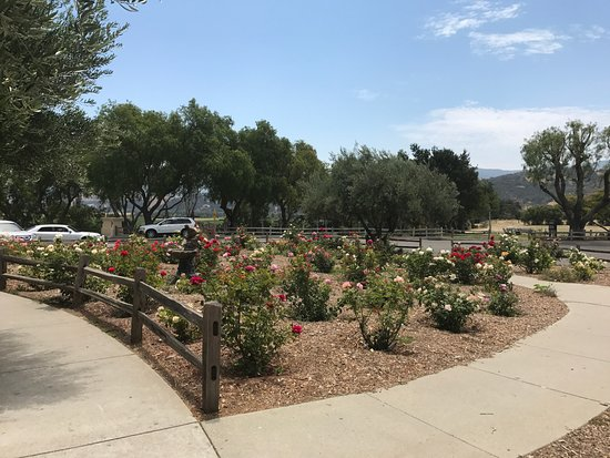 Solvang, CA: Rose Garden