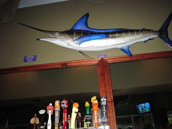 Bayport, Minnesota: Nice fish