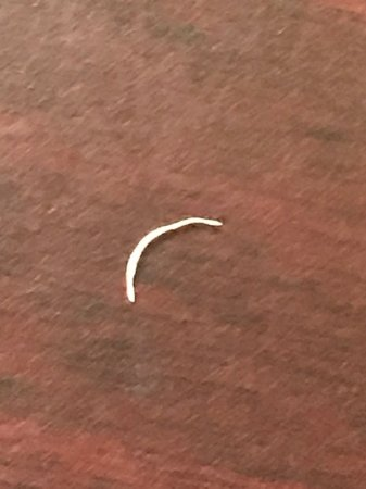 Country Inn & Suites by Radisson, Concord (Kannapolis), NC: THIS FINGERNAIL WAS UNDER THE OTHER PILLOW ON THE OPPOSITE SIDE