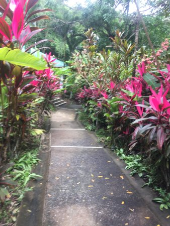 Star Mountain Jungle Lodge: Path from kitchen to pool
