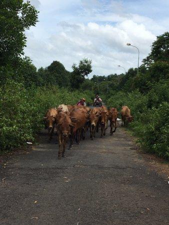 Dalat Easy Rider Club: near the villages