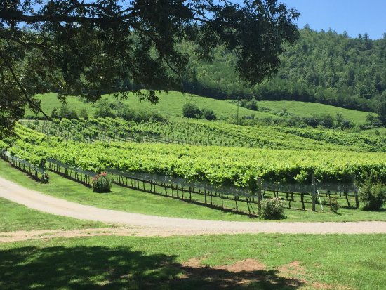 Nottely River Valley Vineyards