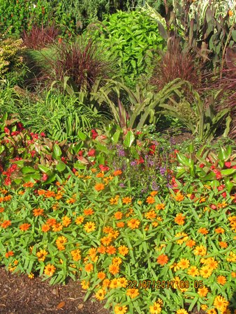 New Hanover County Arboretum: Beautiful combination of types and colors.
