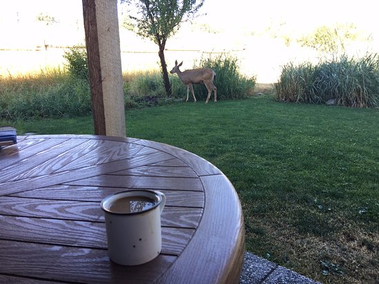 Mt Gardner Inn : Sitting on our patio after breakfast, we were visited by deer and even wild turkeys.