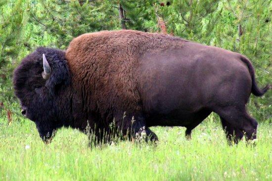 Jackson Hole Natural History