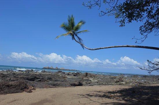 Carate, Costa Rica: La plage San pedrillo