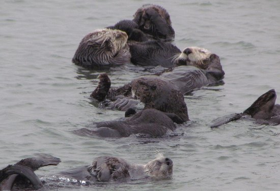 Moss Landing, Californien: Multiple cute