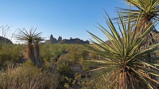 Alpine, TX: Mules Ears Trail- desert hike