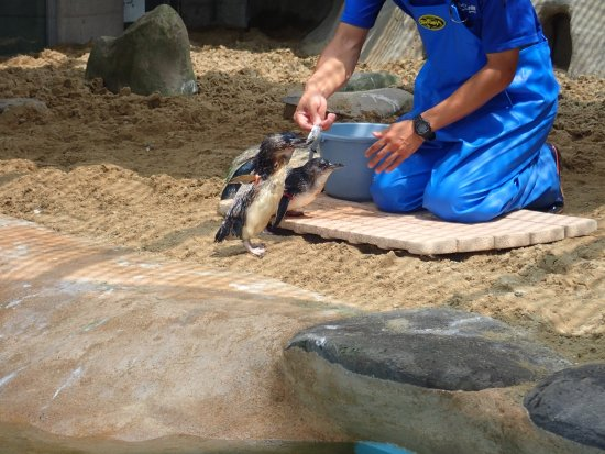 a must for the penguin lover review of nagasaki penguin aquarium