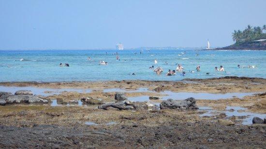 Keauhou, HI: Snorkel scene at Kahalu'u