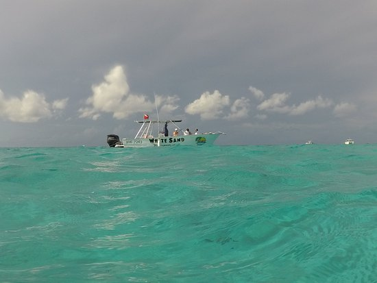 East End, Grand Cayman: Stingray City Snorkeling