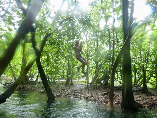 Teahupoo, Polynésie française : One of our group swinging from the rope swing in the mangrove!