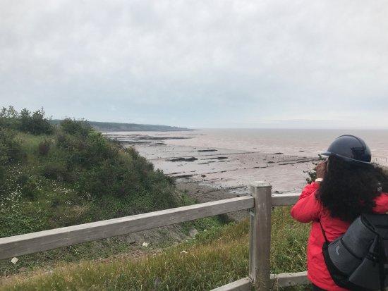 Joggins Fossil Cliffs Centre: Cliffs