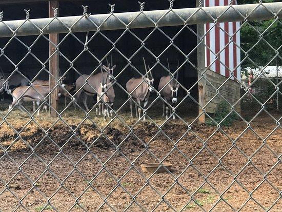 Tiny Zoo, Tiny Cages