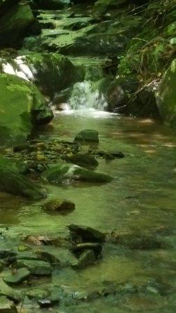 Purlear Creek