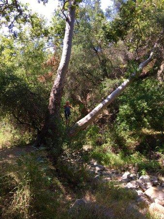 Santa Ynez Falls Trail