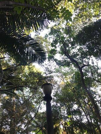 Tenente Siqueira Campos Park (Trianon): photo1.jpg