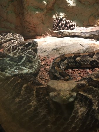 Mississippi Museum of Natural Science : photo2.jpg