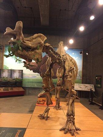 T. Rex Discovery Centre: photo3.jpg