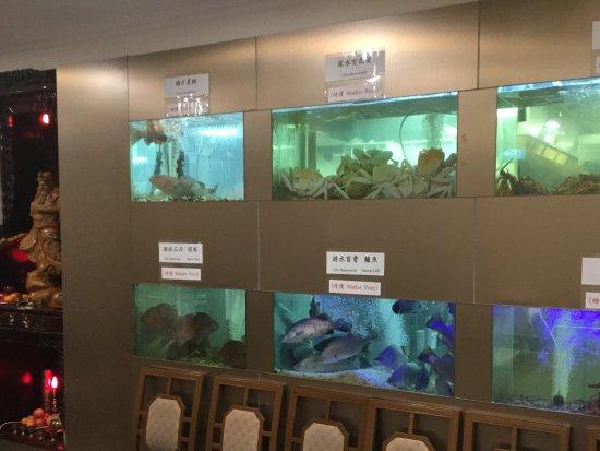 Preston, Australia: Fresh seafood selection