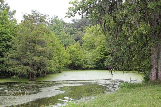 Saint Martinville, LA: bayou